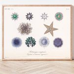 Curiosities of Nature Sea Stars #001