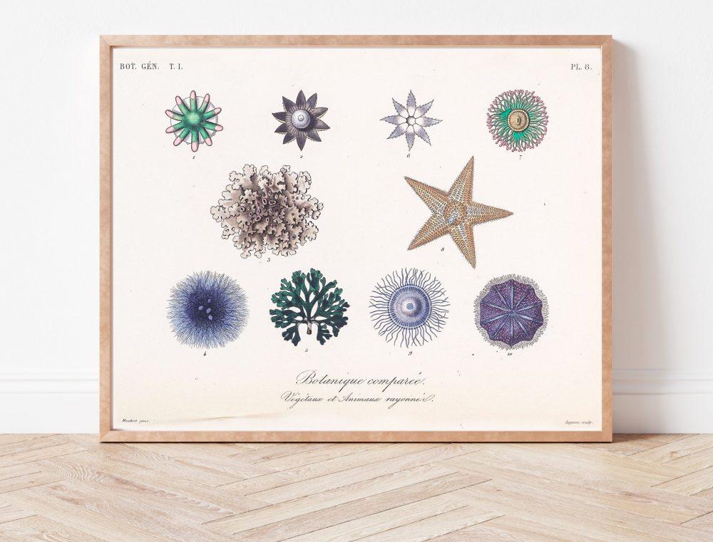 Curiosities of Nature Sea Stars #001