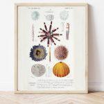 Curiosities of Nature, Sea Urchin, Pencil Urchin #005