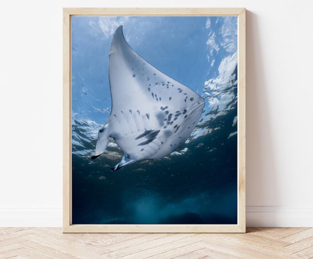 bugDreamer Coral Print