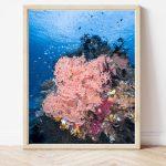 BugDreamer Coral Reef #0007