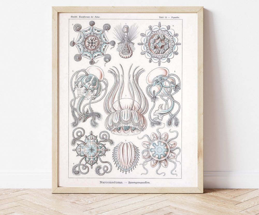 Ernst Haeckel Jellyfish Science #0030