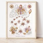 Ernst Haeckel Siphonophores  #0032
