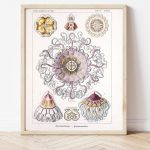 Ernst Haeckel Jellyfish Science #0028