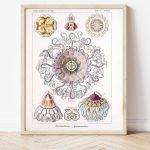 Ernst Haeckel Jellyfish Science #0028
