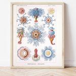 Ernst Haeckel Blue Jellyfish #0029