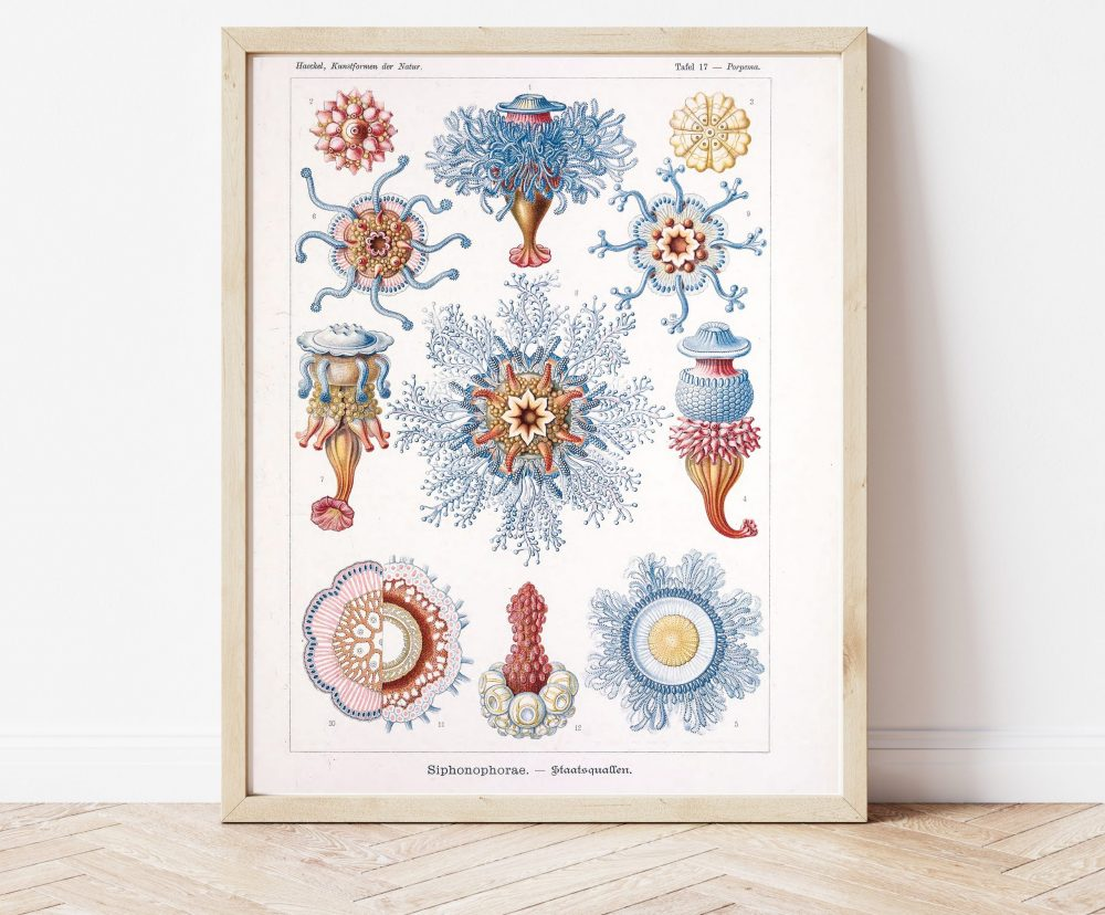 Ernst Haeckel Blue Jellyfish #0029
