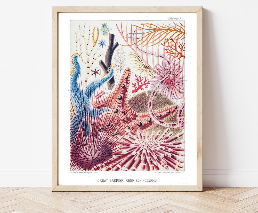 William Saville-Kent Starfish #0068