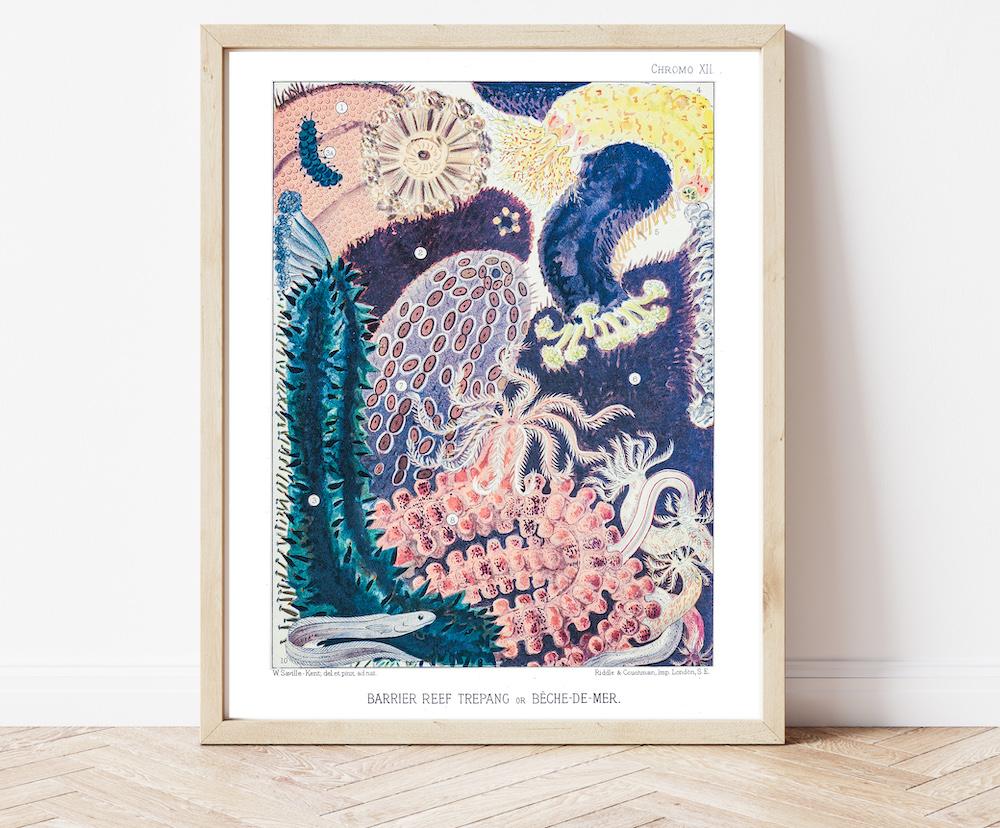 William Saville-Kent Starfish #0069