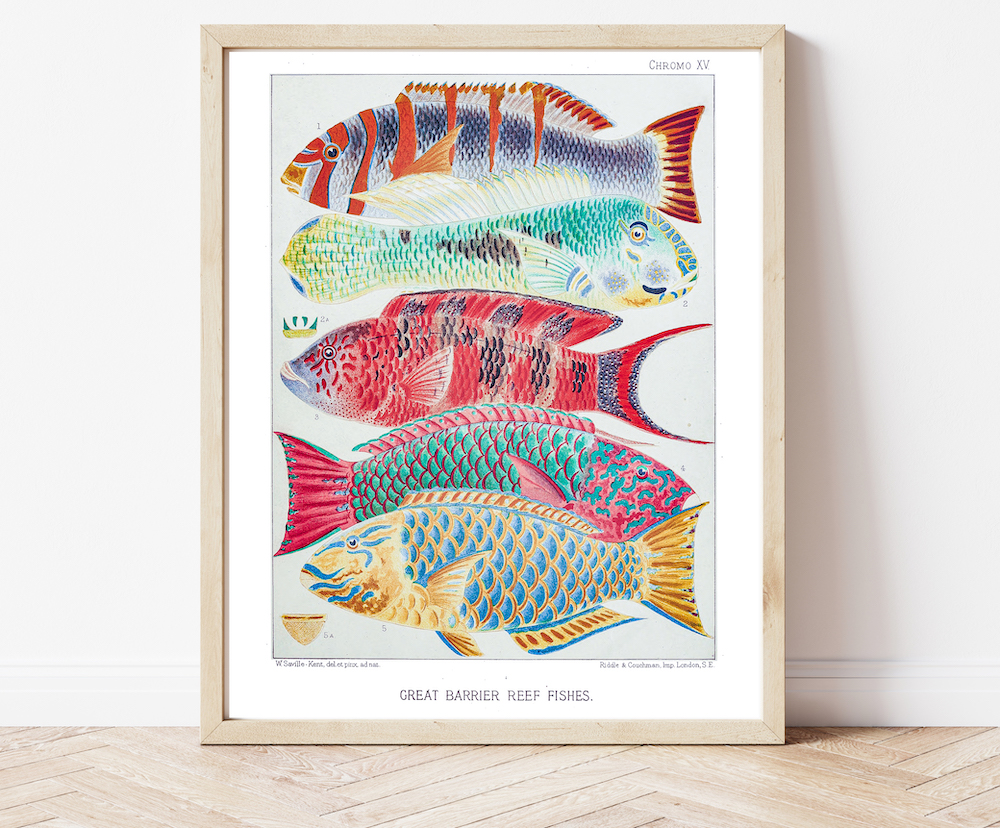 William Saville-Kent Reef Fish #0070
