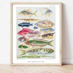 William Saville-Kent Reef Fish #0071