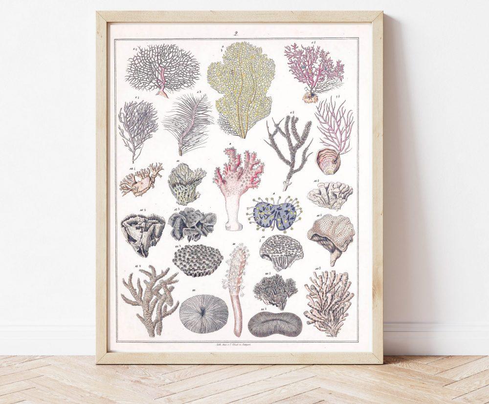 Animal Kingdom Coral Biology, Hard and Soft Coral  #0035