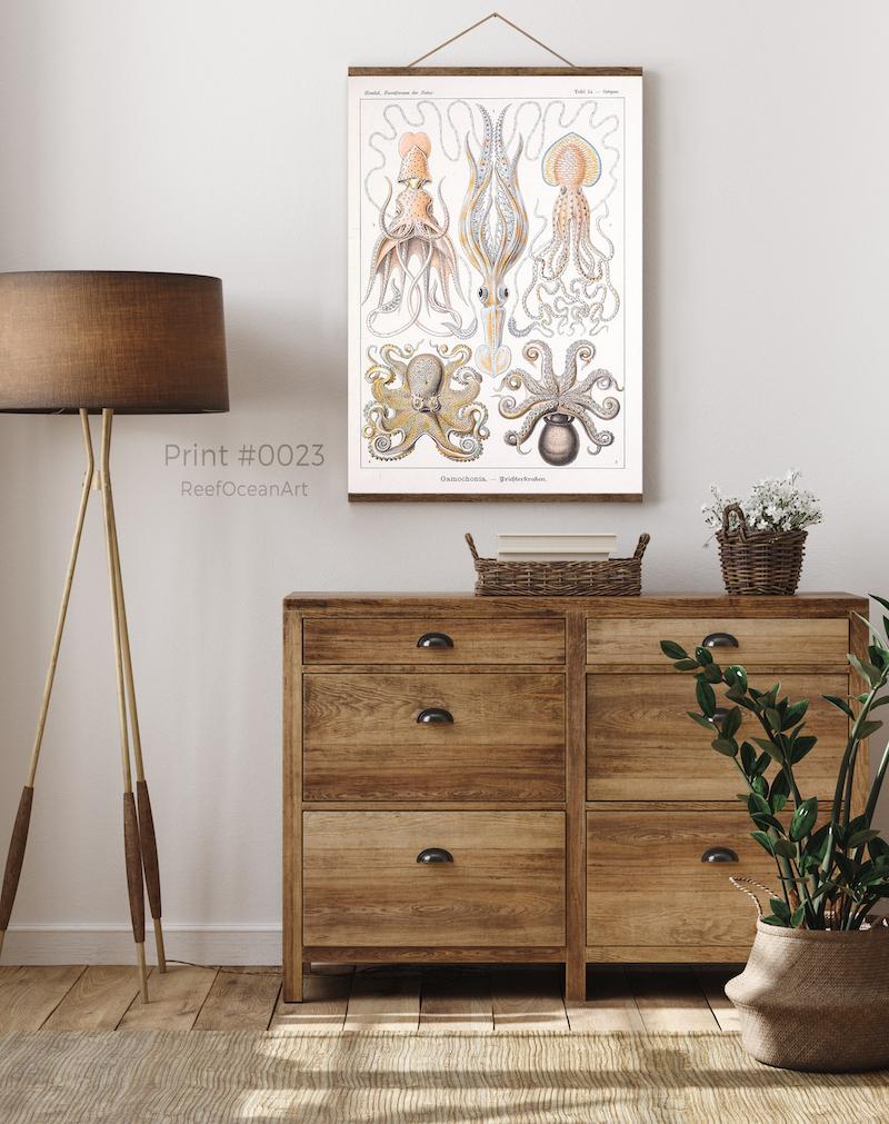 Ernst Haeckel Cephlapods #0023