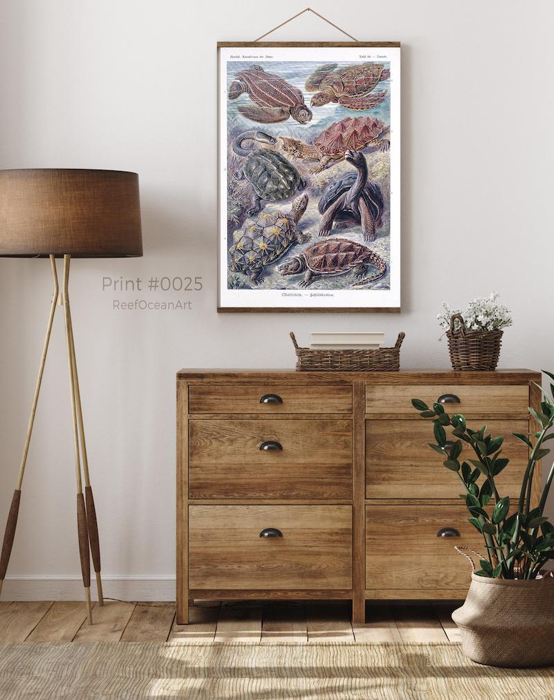 Ernst Haeckel Turtles #0025