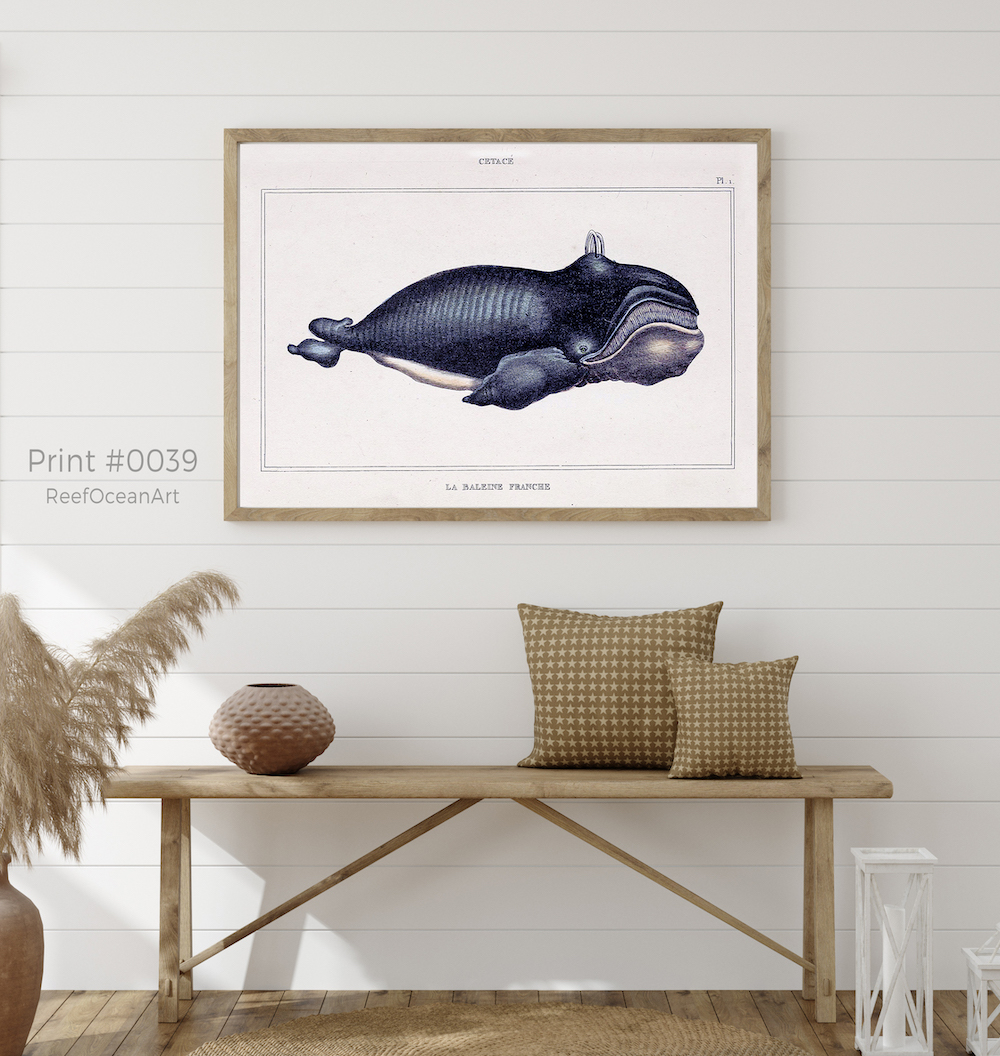 Natural History Cetaceans  #0039